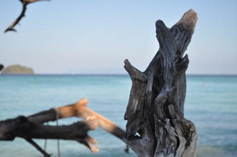 Drift wood. Photo by Jesse Wiles.